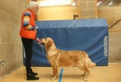 Winner of Puppy Dog