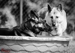 Daisy & Shylo