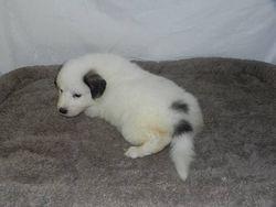 eva - f3 - 04 - audrey's pup