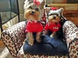 Tiny Mia  Just under 3#