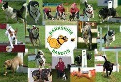 Barkshire Bandits