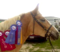 Hunt Seat Under Saddle Division Champion!