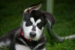 Baby Tiva