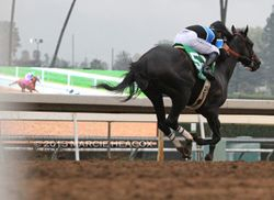 Shared Belief and California Chrome