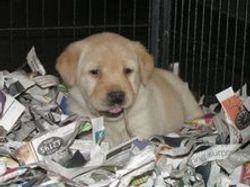 ryan as a puppy