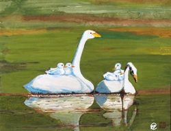Baby Swans  With Parents       A