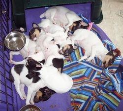 Laney's Pups 2008