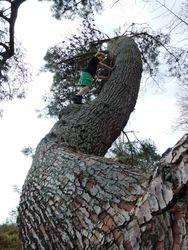 Tree Climbing - Little Waipa Reserve Karapiro