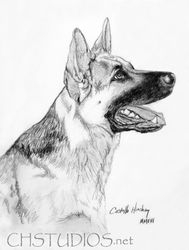 German Shepherd Pet Portrait Commission