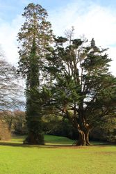 Rowden House lawn and feature trees