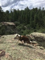 K9 Snap searching among Boulders