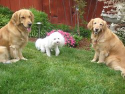 Parker & Daisy and their friend Foster!