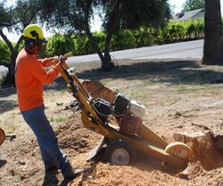 Stump Grinding at its best!