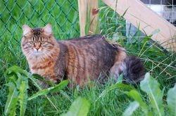 I gresset ute i kattegården.