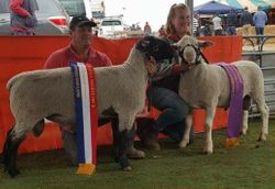 Champion Interbred and Reserve Interbred rams