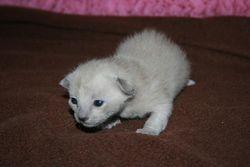 12 days old - Bertie