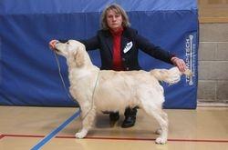 Winner of Minor Puppy Dog