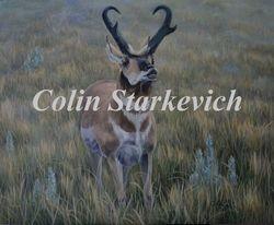 "Bindloss Buck (16 by 20"" acrylic on masonite)"