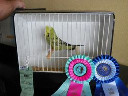 Best Novice and Best Young Opposite in Show