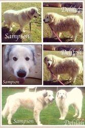 Sampson & Delilah (Bonded Pair)