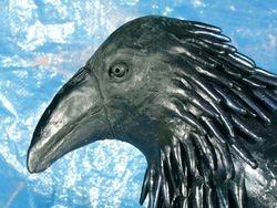 Raven, detail