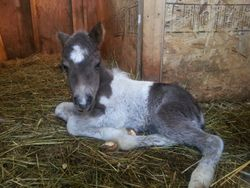 Chloe's New filly baby 2013