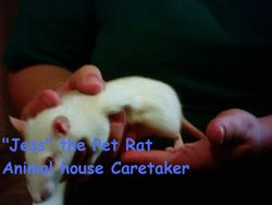 """Jess The Pet Rat"""