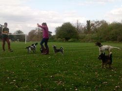 Doggy fun at Hardwick Heath