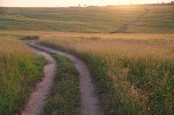 cruisin the savanna