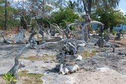 The Garden of Eden at Black Point