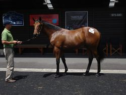 Dubai Destination Filly $60,000