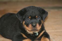 Cooper at 6 weeks