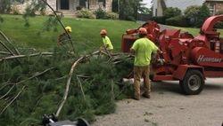 Tree Guys Tree Service Media PA