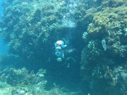 Swimming through the coral