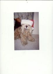 Sandy Claus