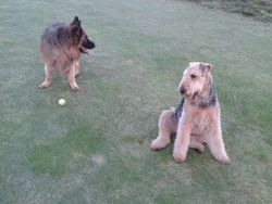 Tyson & Bosco