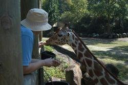 Gibbes Farm - Sept 2007 /  Zoo