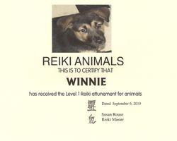 Winnie the Reiki Dog