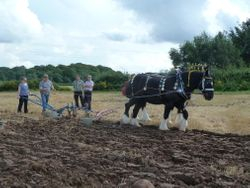Horse ploughing demo