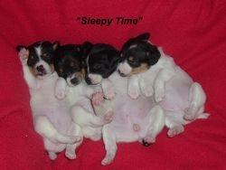 Baby Girl, Buddy, Gabby and Tia