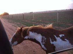 Xanadu Toledo Jane (Quarter Pony)