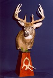 Whitetail buck table top pedestal