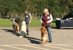 Class 10 Open Dog