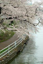 Potomac River, April 2009