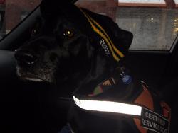 Service Dog Sophie
