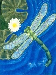 Dragonflight, Oil Pastel, 11x14, Carrie MaKenna 2001