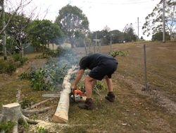 Tree Cutting 6