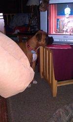 Gretta watching tv