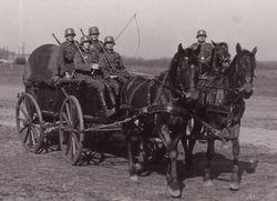 Horse drawn cargo transport: