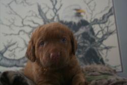 Sedge boy 3 weeks old